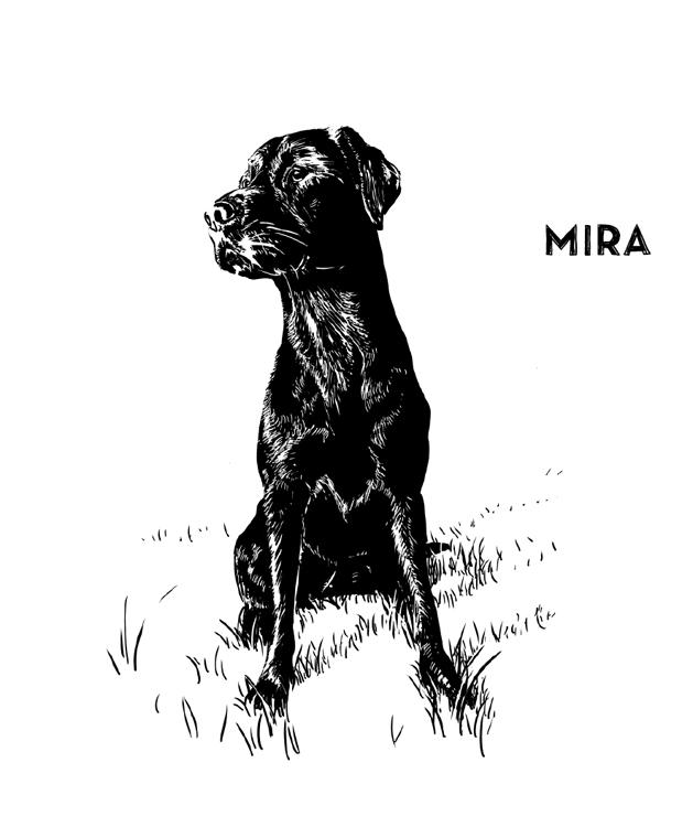 01-slide-Mira